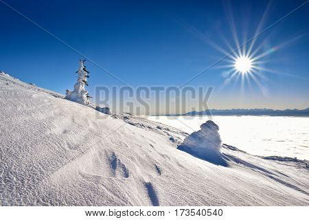 Snow covered tree on mountain with Tatra mountain background