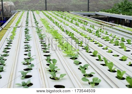 planting crops using water media, the term is usually referred to hydroponics