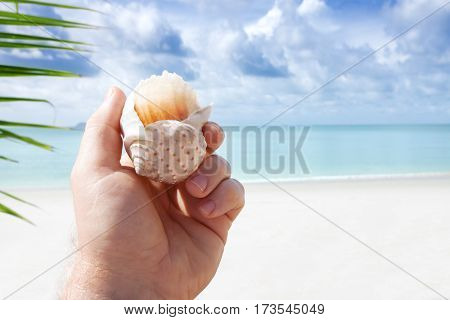 close up view of man's hand with shell on tropical beach background