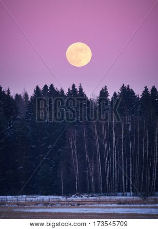 Full moon landscape at night. Rising moon above the forest in winter.