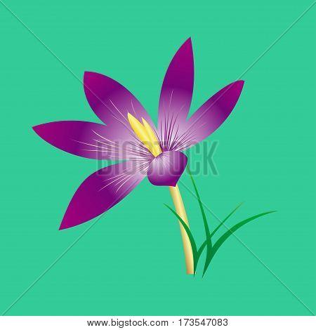delicate elegant lilac flower on a stalk