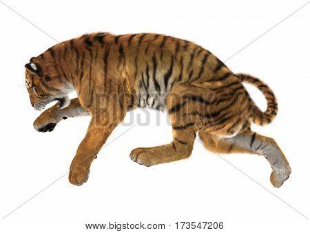 3D Rendering Big Cat Tiger On White