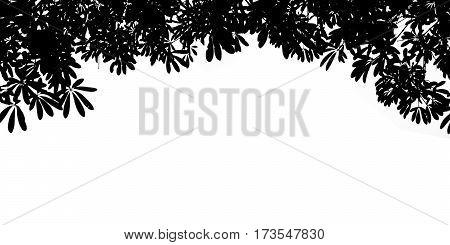 Black Silhouette Bush leaves isolate on white background