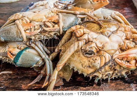 Fresh raw crabs on fishmarket in Asia