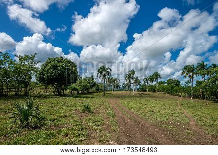 Scenic rural view with palms and dramatic sky in Dominican Republic
