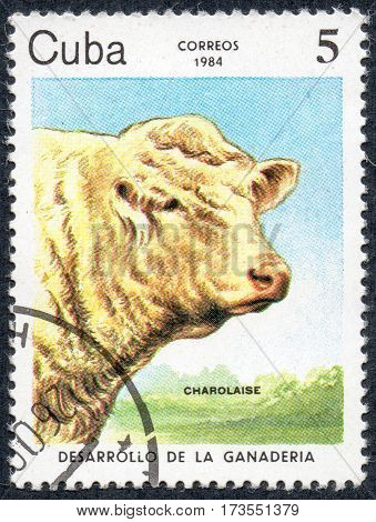 UKRAINE - CIRCA 2017: A stamp printed in Cuba shows a cow breed Charolaise the series Livestock Development circa 1984