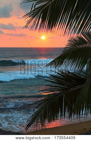 beautiful sea sunset and palm leaves on foreground