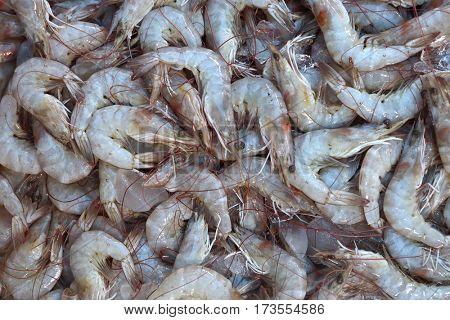 raw shrimps on the market - background