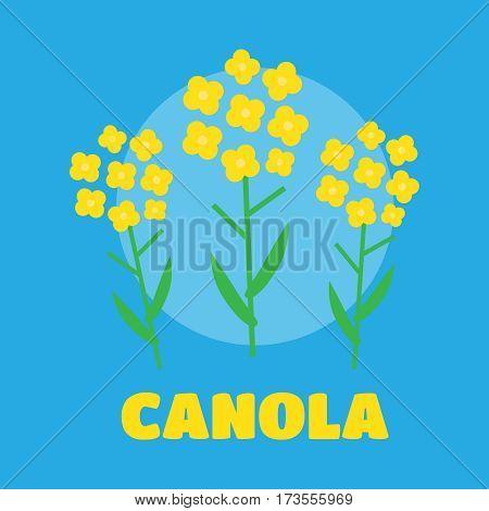 Canola flower vector illustration. Canola flower concept in flat style. Canola flowers