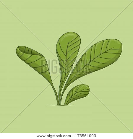 Green grass, four leafs, foreground line vector