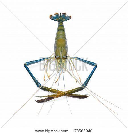 raw prawnsshrimps isolated on the white background
