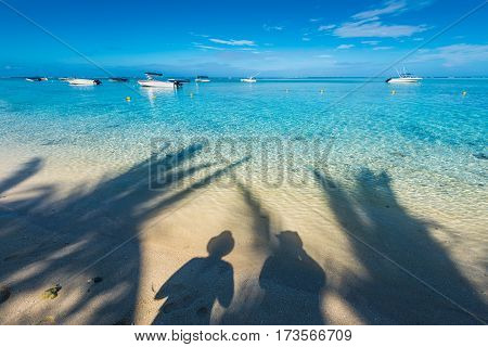 View of the beach with shadow of a couple and palm tree on water