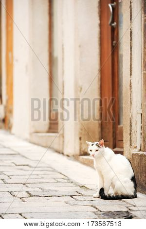 Domestic cat sitting by the entrance to old house in Sibenik, Croatia