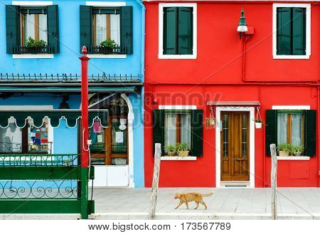 A red cat and colorful buildings in Burano Venice Italy; europe