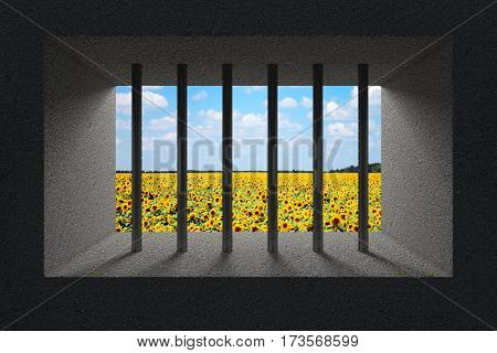 Sky and Sunflower Field Seen Through Jail Bars in Prison Window extreme closeup. 3d Rendering.