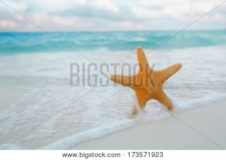 red  starfish  in sea wave with sky and seascape,  shallow dof