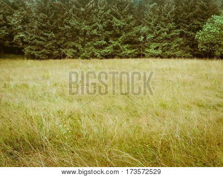 Forest trees and meadow, simple natural background backdrop, without sky, nearly just duo chrome or duotone, two-thirds, big copy space. low contrast in yellow and green