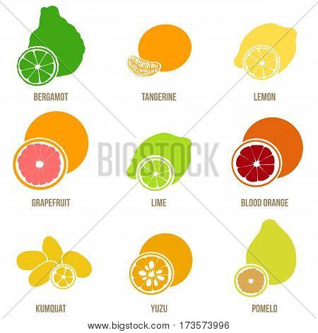 Citrus Fruits Vector Flat Set, Whole Fruits And Slices