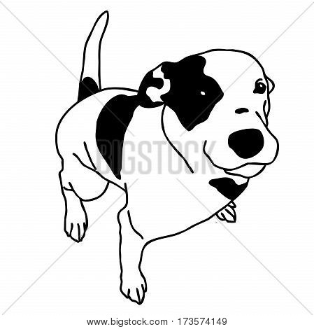 Vector black and white dog sitting. Smart and darling doggie. Man's best friend. Outlined cute doggy. Crafty and sly doggie. Flatten isolated master illustration.
