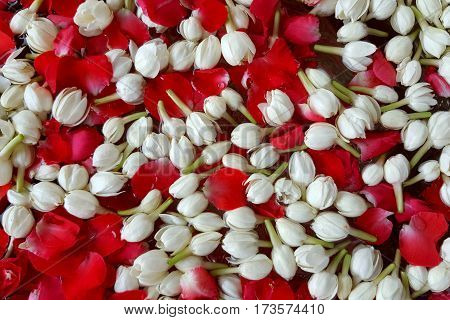 Background jasmine and roses used in perfume during the Songkran festival in Thailand