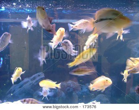 Aqarium Fishes
