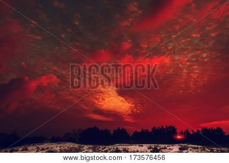 Fiery orange colorful sunset sky. Beautiful sky. winter forest at sunset.