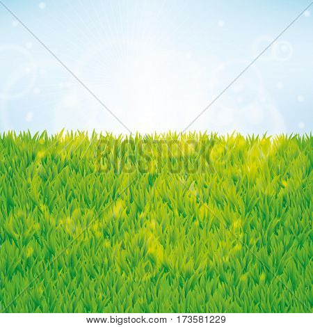 Summer green grass background. Seamless pattern vector for banner texture design for web, card, banner, spring, sale, flyer, pack, logo, web, vip exclusive certificate, gift luxury voucher, welcome.