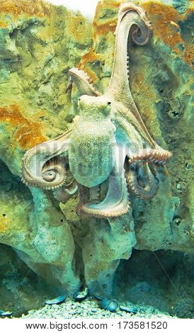 Octopus with feelers from Mediterranean Sea in Greece