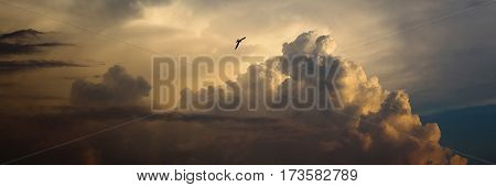 Panorama photo of bird flying in the sky a large pearl cloud fluffy cloud like a mountain a swallow flying in the sky in the distance sunset light the day ends. Sky panorama