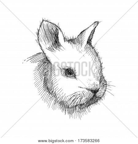 Vector graphic sketch of baby rabbit profile in black isolated on white background. Silhouette of decorative cute bunny head in lineart style. Symbol of Happy Easter.