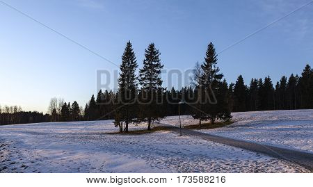 Grove of trees on snowy meadow. Icy snow on the ground, early morning lit. Well used park, environment. Urban area in the neighborhood.