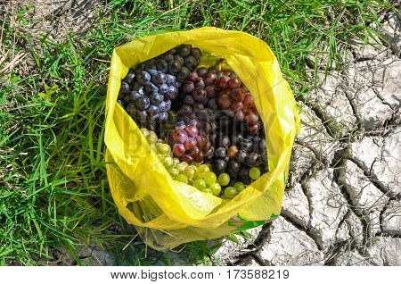 Ripe bunches of green and black grapes in the bag.