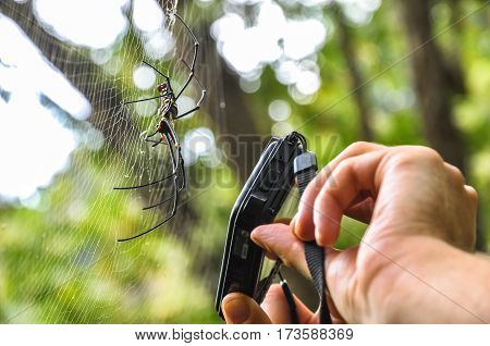 Traveler taking pictures of a large tropical spider.