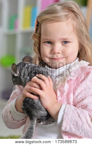 Portrait of a cute little girl playing with chinchilla