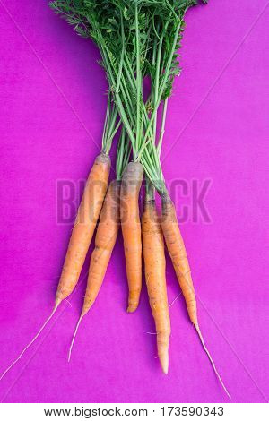 Fresh organic carrots over purple background, top view