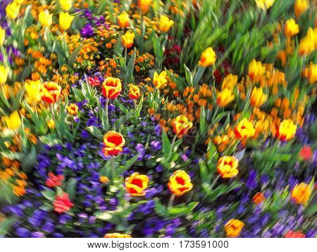 Colored flower bed in Spring. Frame filled with colorful flowers and radial in-motion unsharpness.
