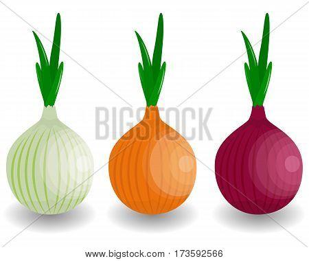 set Fresh Vegetable Onion isolated icon. Onion for farm market vegetarian salad recipe design. vector illustration in flat style