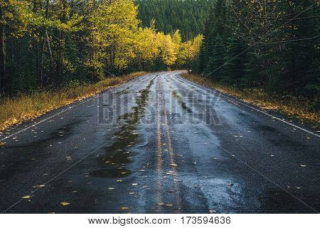 Image of a road leading to an autumn forest.