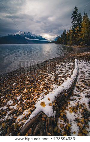 Autumn leaves on winter snow at Lake McDonald.