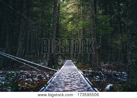 Image of a dark icy forest path.