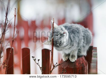 striped cat sitting on the fence and purring from pleasure