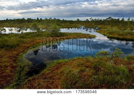 Swamp landscape with water basin in autumn