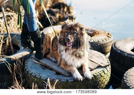 Girl Playing With Caucasian Shepherd Dog, Autumn
