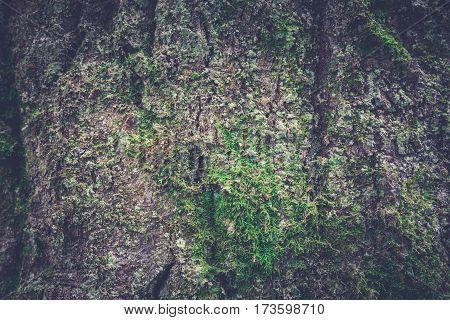 Tree Bark Texture. Wooden Texture. Toning Photo