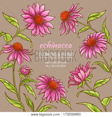 echinacea purpurea vector frame on color background