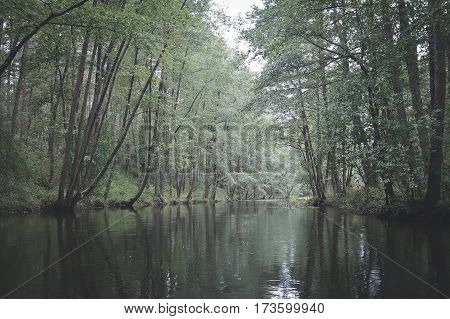 smal river in green forest in belarus nature