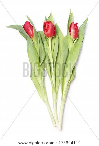 Red flower tulips bouquet isolated on white background