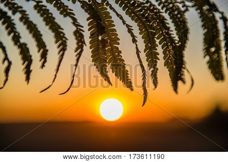 Detail of fern leaf at sunset a small depth of field