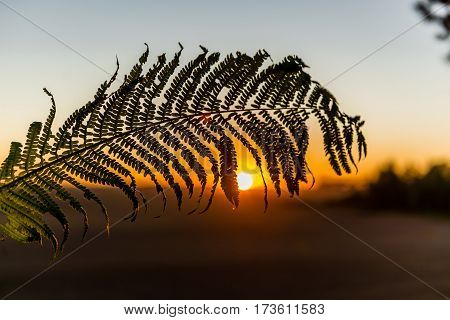 The branch of fern at sunset a small depth of field