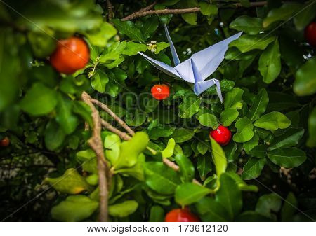 The bird made by paper tying to eat acerola